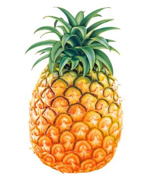 Pineapple - Obrázkek zdarma pro Nokia X7