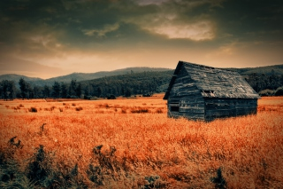 Free Lonely Countryside Picture for Android, iPhone and iPad