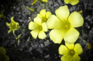 Yellow Flowers Picture for Android, iPhone and iPad