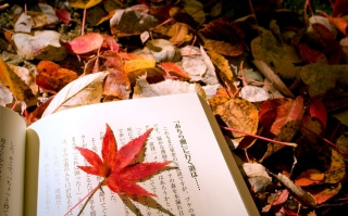 Red Leaf On A Book Background for Android, iPhone and iPad
