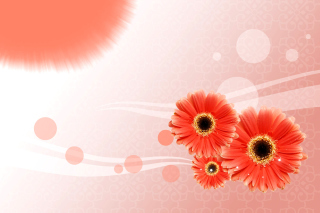 Card with gerberas Background for Android, iPhone and iPad