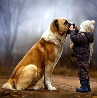 I Love Dogs - Obrázkek zdarma pro 1024x1024