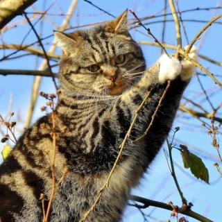 Cat on Tree - Obrázkek zdarma pro iPad