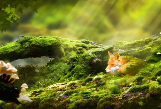 Sleeping Fox Background for Android, iPhone and iPad