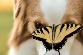 Dog And Butterfly Picture for Android, iPhone and iPad