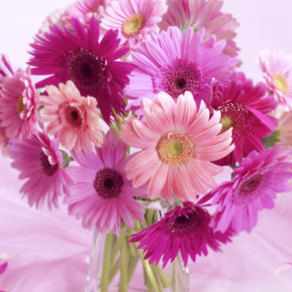 Gerbera Bouquet Idea - Obrázkek zdarma pro 128x128