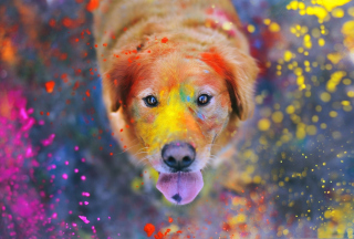 Free Dog Under Colorful Rain Picture for Android, iPhone and iPad