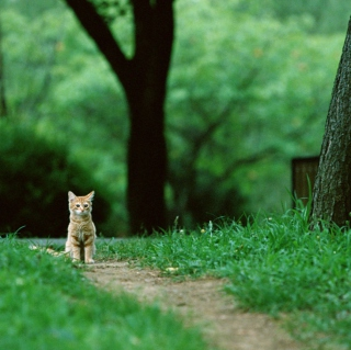 Little Cat In Park - Obrázkek zdarma pro iPad 2