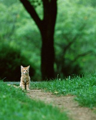 Little Cat In Park - Obrázkek zdarma pro Nokia X7