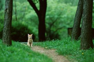 Little Cat In Park - Obrázkek zdarma pro 480x320