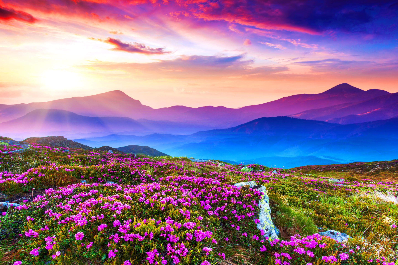 цветы поляна горы холм небо  № 3836138 загрузить
