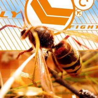 Bee - Obrázkek zdarma pro 208x208