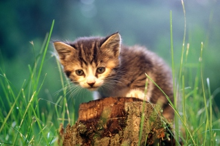 Little Cute Kitty Background for Android, iPhone and iPad
