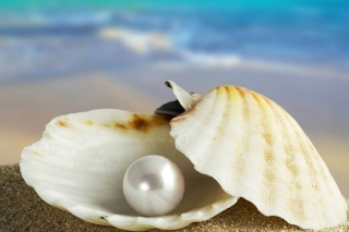 Pearl And Seashell Picture for Android, iPhone and iPad