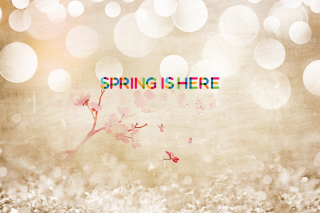 Spring Is Here Picture for Android, iPhone and iPad