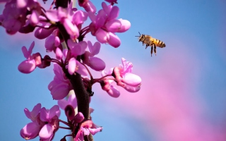 Purple Flowers And Bee Wallpaper for Android, iPhone and iPad