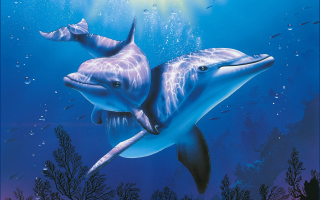 Blue Dolphins Wallpaper for Android, iPhone and iPad