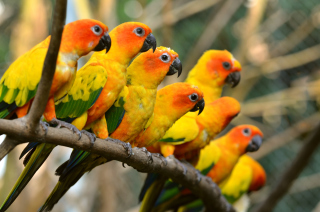 32 best Parrot Wallpapers images on Pinterest  Parrots