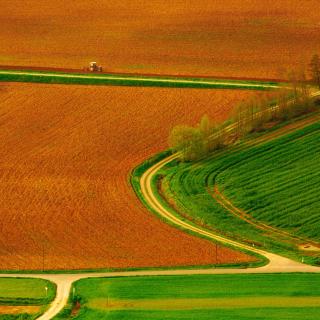 Harvest Field - Obrázkek zdarma pro 320x320