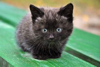 Cute Little Black Kitten Wallpaper for Android, iPhone and iPad