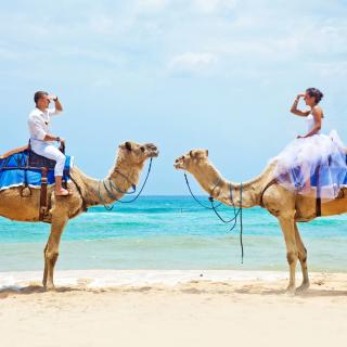 Two Camels - Obrázkek zdarma pro 320x320