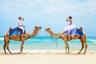 Two Camels - Obrázkek zdarma pro 1600x900