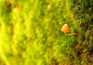 Little Sprout - Obrázkek zdarma pro 1920x1200
