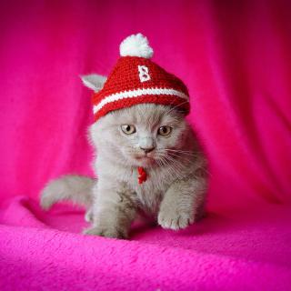Cute Grey Kitten In Little Red Hat - Obrázkek zdarma pro 208x208