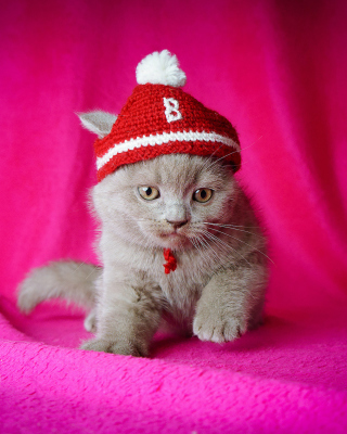 Cute Grey Kitten In Little Red Hat - Obrázkek zdarma pro 128x160
