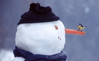 Free Snowman And Sparrow Picture for Android, iPhone and iPad
