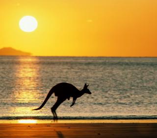 Australian Kangaroo - Obrázkek zdarma pro iPad Air