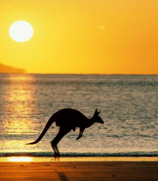 Australian Kangaroo - Obrázkek zdarma pro Nokia C2-06