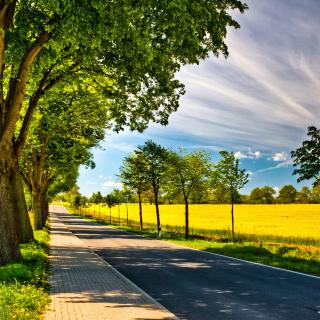 Ideal avenue for cars - Obrázkek zdarma pro 128x128