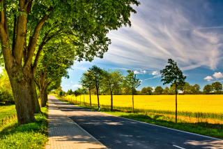 Ideal avenue for cars Background for Android, iPhone and iPad