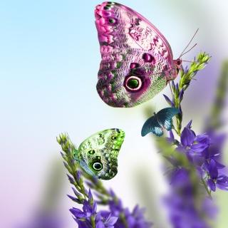 Tender Butterfly HD - Obrázkek zdarma pro 208x208
