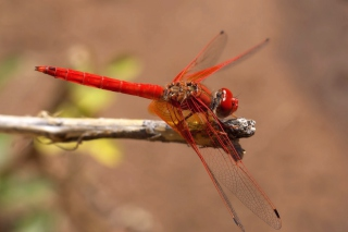 Dragonfly Wallpaper for Android, iPhone and iPad