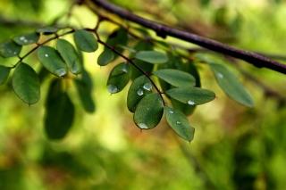Macro Green Leaves - Obrázkek zdarma pro Samsung Galaxy Tab 4 7.0 LTE