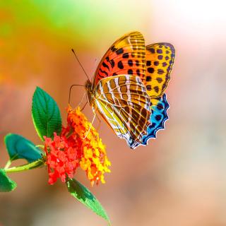 Colorful Animated Butterfly - Obrázkek zdarma pro 208x208
