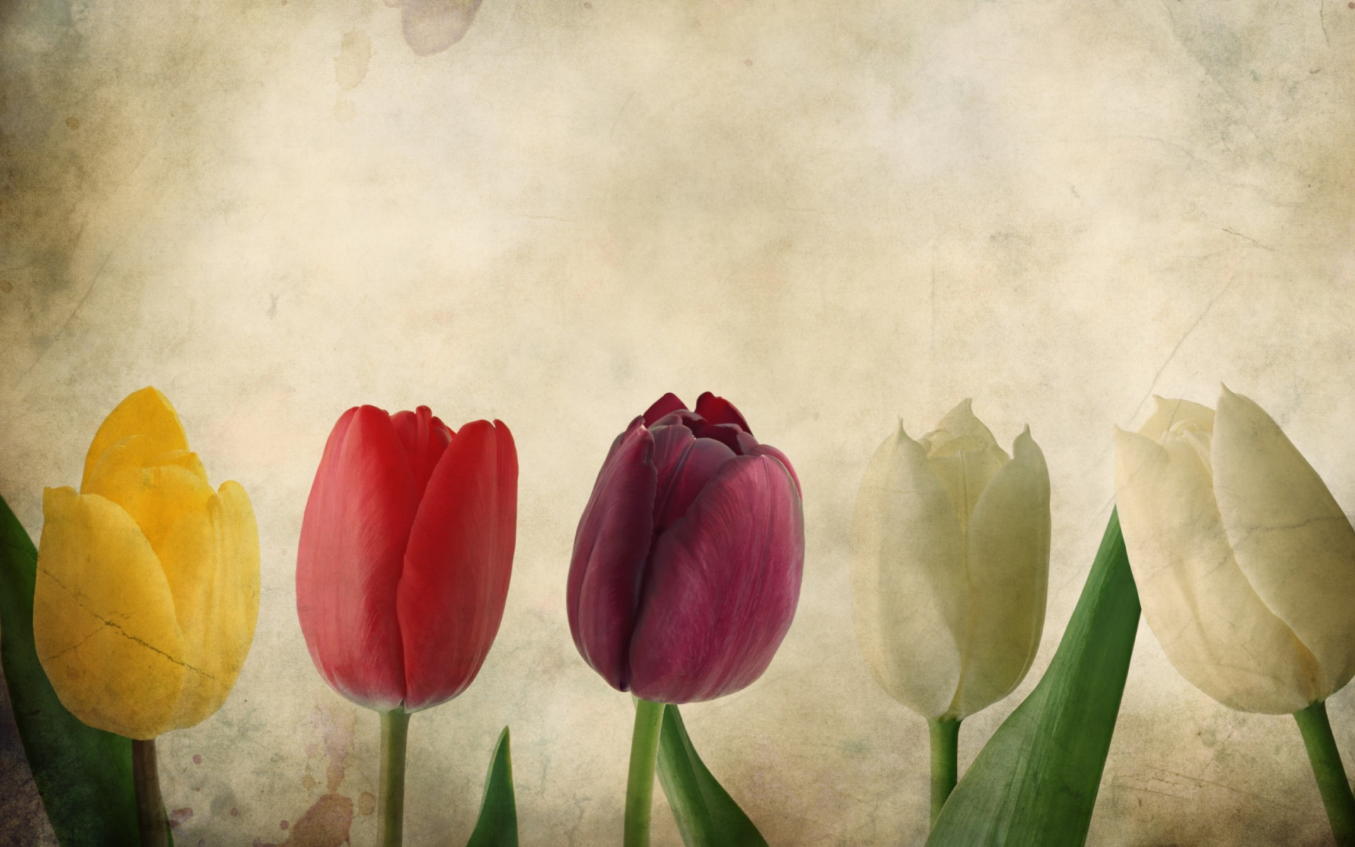 Tulips Vintage Wallpaper For Widescreen Desktop Pc