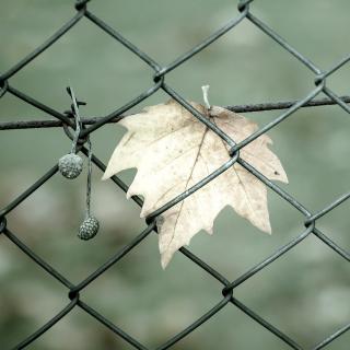 Macro leaf photo - Obrázkek zdarma pro iPad 2