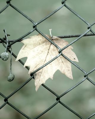 Macro leaf photo - Obrázkek zdarma pro Nokia Asha 308