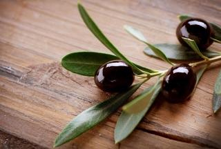 Olive Branch - Obrázkek zdarma pro 176x144
