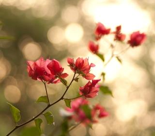 Branches With Red Petals - Obrázkek zdarma pro iPad 2