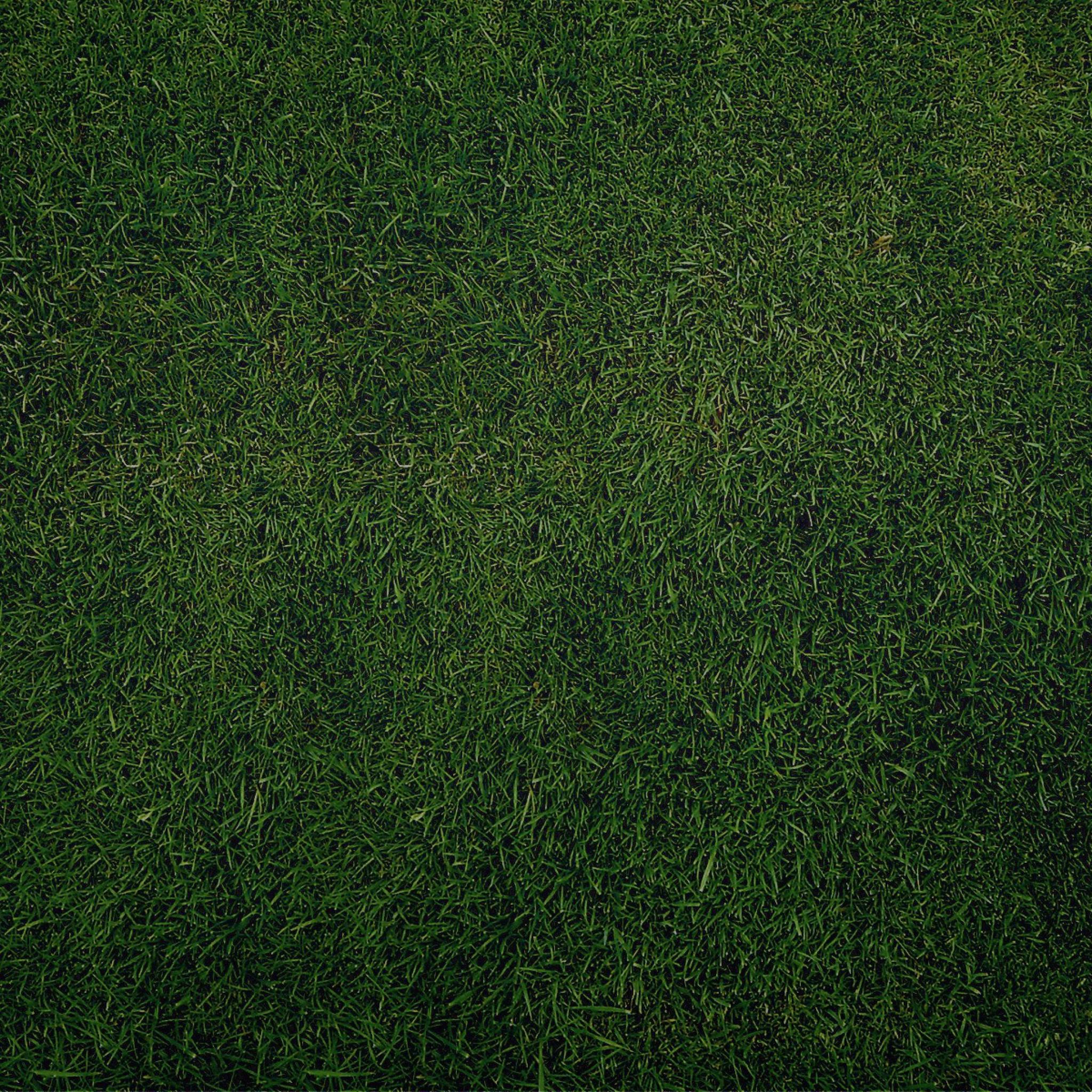 трава текстура  № 1309955 без смс