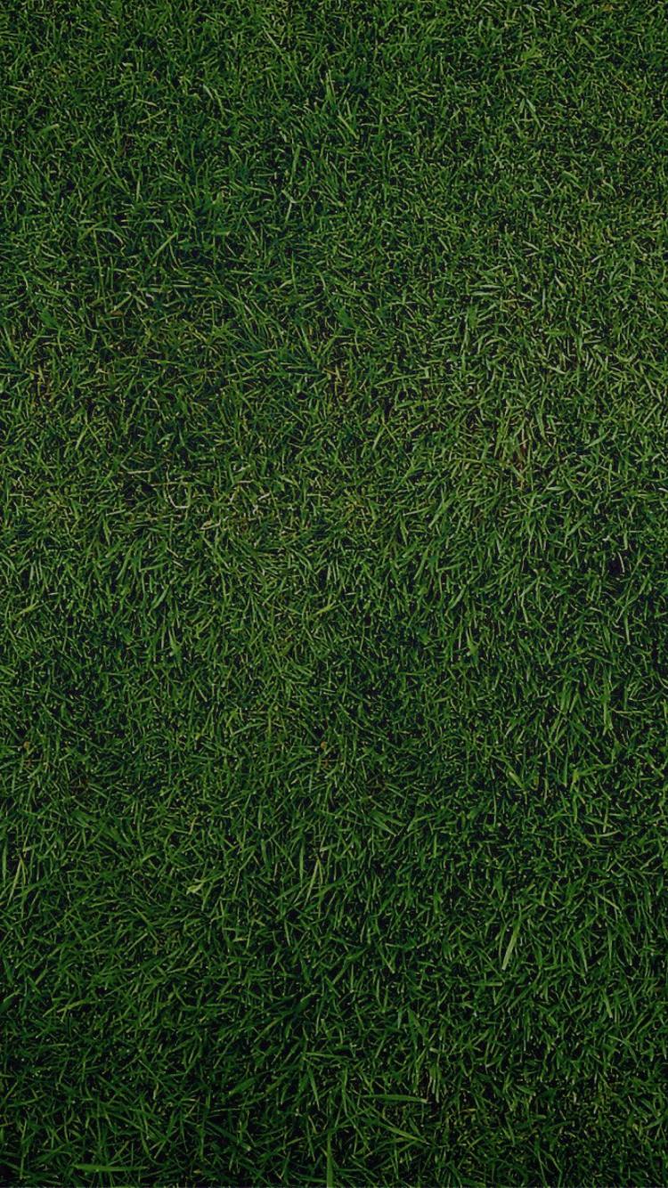 трава текстура  № 1309987  скачать