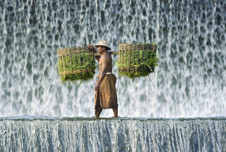 Vietnamese Farmer Picture for Android, iPhone and iPad