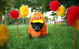 Carnival Dog - Obrázkek zdarma pro 1280x1024