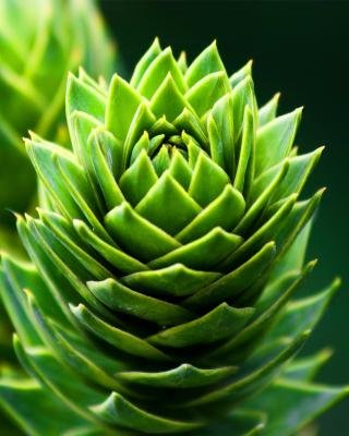 Something Green - Obrázkek zdarma pro 640x960