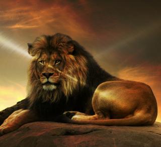 Lion - Obrázkek zdarma pro iPad