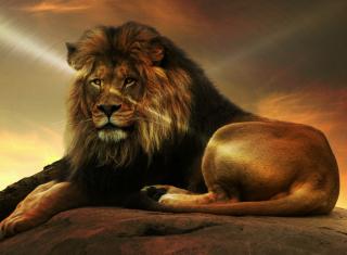 Lion - Obrázkek zdarma pro 1280x1024
